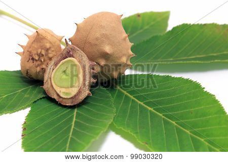 Chestnuts on a Leaf