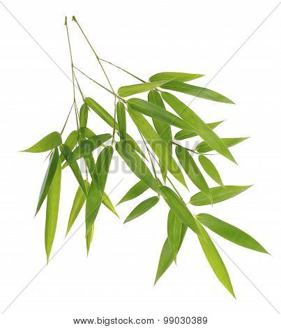 Green Bamboo Leaves Isolated On White Background