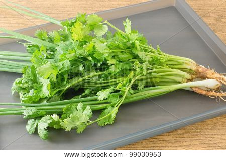 Scallion And Chinese Parsley On A Grey Tray