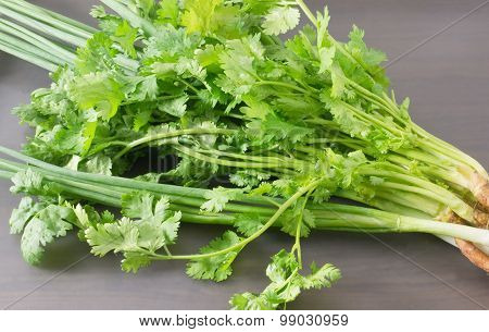 Fresh Green Coriander And Scallion On A Grey Tray