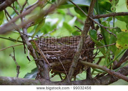 Bird's Nets