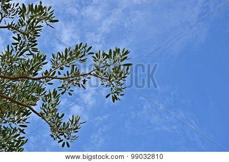 Tree And Bluesky