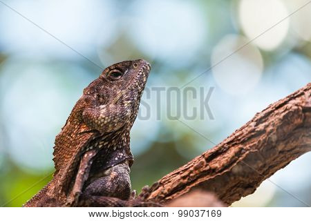 Close Up View Of Lizard