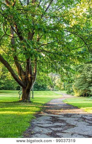 Beautiful Tree In Green Park With Pathway Horizontal