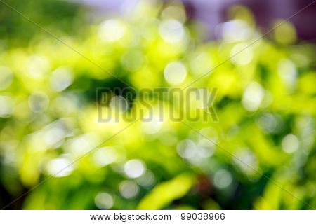 Natural Bokeh Background