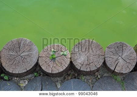 Three Leaf Clover On A Wooden Log Next To Waterbody