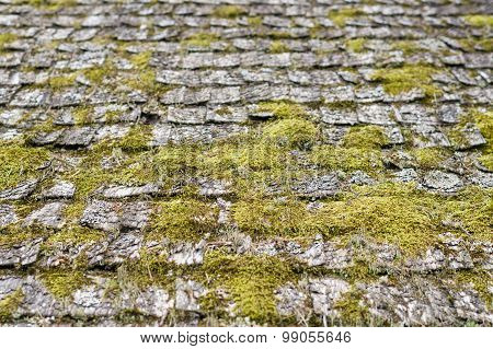 Closeup On Old And Weathered Wooden Roof Shingle Covered By Moss
