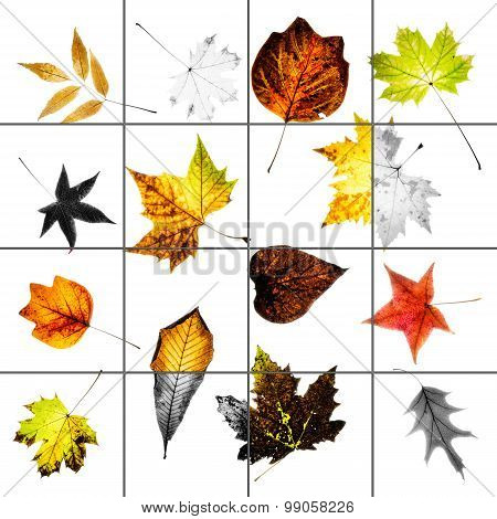 Colorful Autumn Leaves Collage With Bleached Squares And Grid