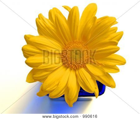 Yellow Flower W/Colbalt Blue Vase