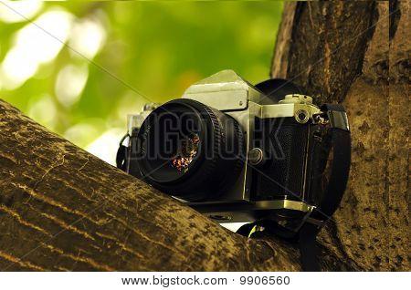 Photohunting