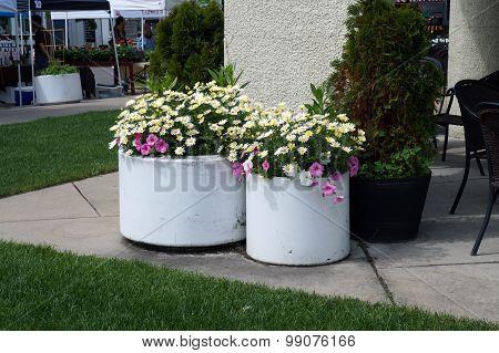 White Flower Pots