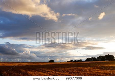 Cotswolds Barley Field & Sunset