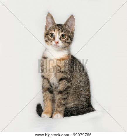Tricolor Kitten Sitting On Gray