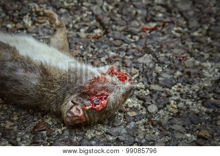 Disfigured bloody squirrel laying on asphalt