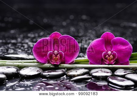 Two orchid with long stem and stones , on wet background