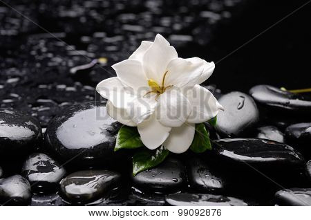 beautiful gardenia flower with therapy stones