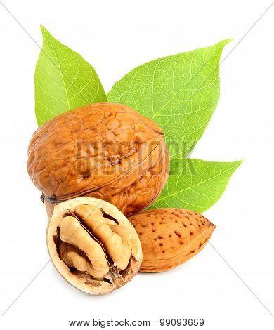 Walnuts And Hazelnuts Isolated.