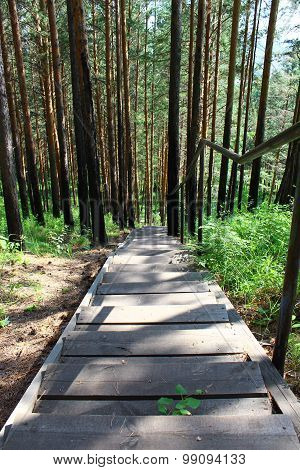 Stairs in the pine forest
