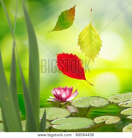 image of  falling autumn leaves and a lotus flower