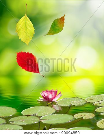 image of falling autumn leaves on the  lotus flower background of  water