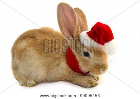 Rabbit In The Hat Of Santa Claus .