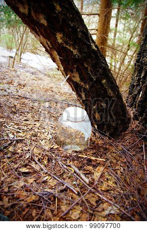 drop birch juice. water of birch sap