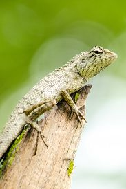 picture of lizards  - emma gray - JPG