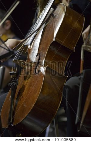 A Cellist In Concert