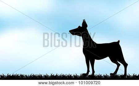Silhouette greyhound on the field illustration