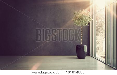 Potted House Plant in Shiny Black Pot Thriving in Empty Room with Gray Walls Next to Window with Bright Sunlight Streaming Through. 3d Rendering.