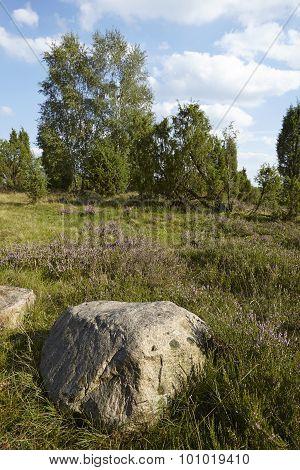 Luneburg Heath - Heathland With Stone Rock