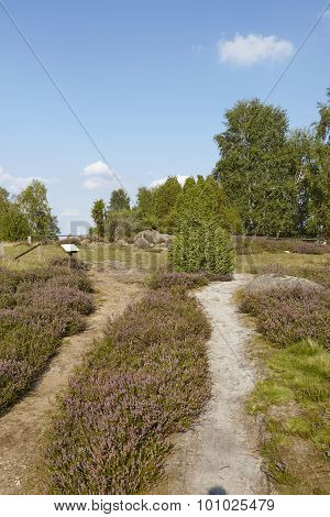 Luneburg Heath - Small Path In The Heathland