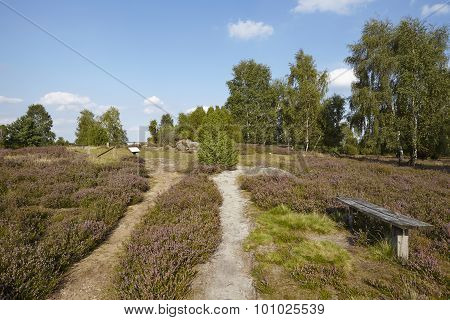 Luneburg Heath - Small Path And Bench In The Heathland