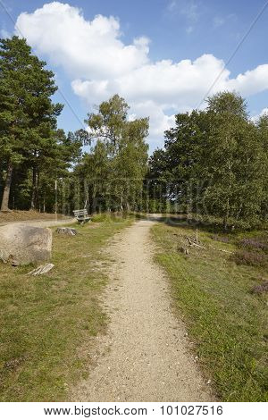 Luneburg Heath - Hike Path And Stone Rock