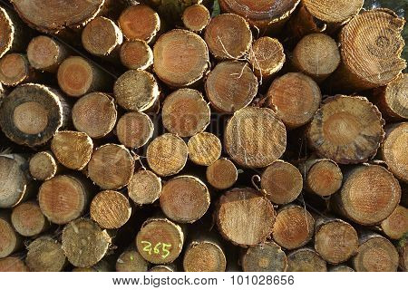 Luneburg Heath - Pile Of Tree Trunks At Sided Light