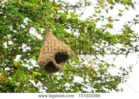 Skylark Nests