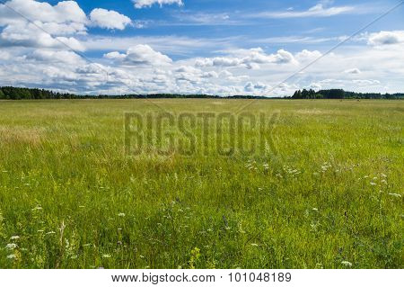 Uncultivated  Countryside Field, Summertime Rural Landscape