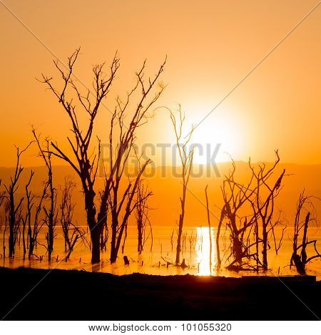 Dead Trees In Lake Silhouetted At Dawn