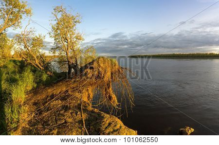 The roots keep tree on precipice of the river