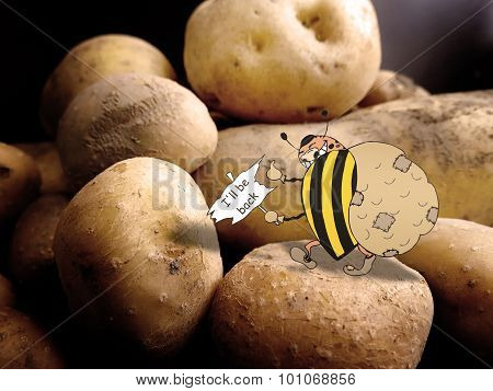 Combination of drawing and pictures - Colorado beetle had stolen potatoes