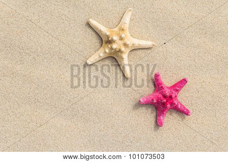 Beach Background Top View Sea Shells Stars