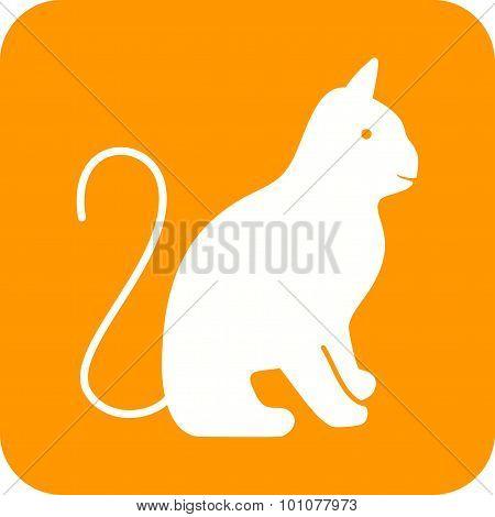 Cat , Animal