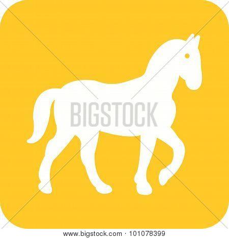 Horse , Animal