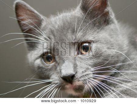 Kitten2 F