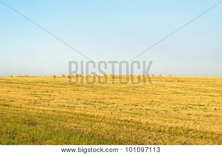 Field With Round Bales