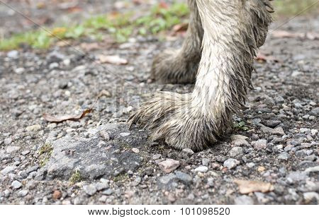 Dirty Paws