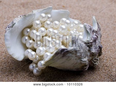 The exotic sea shell with a pearl beads lies on sand