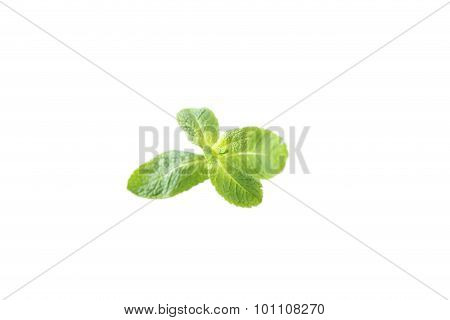 Fresh Mint Isolated On A White