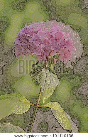 Art numérique : fleur d'hortensia