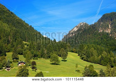 Mountain Forests - Valbruna Tarvisio Italy